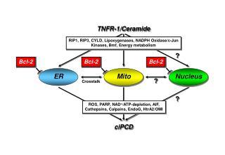 TNFR-1/Ceramide