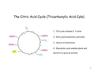 The Citric Acid Cycle (Tricarboxylic Acid Cyle)