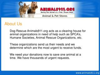 Help Animals - Animal Abuse