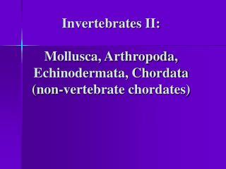 Invertebrates II: