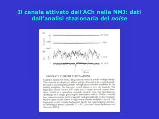 Il canale attivato dall'ACh nella NMJ: dati dall'analisi stazionaria del  noise