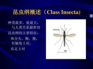昆虫纲概述( Class Insecta)