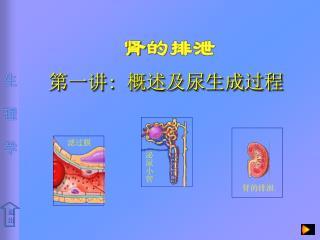 第一讲 :  概述及尿生成过程