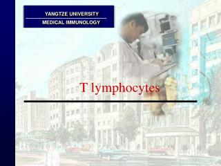 T lymphocytes