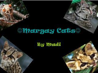  Margay Cats 