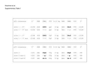 p53 consensus site 1 - 5' site 1 - 5' mut site 1 - 3' site 1 - 3' mut