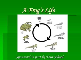 A Frog�s Life