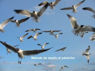 Metode de studiu al p ăsări lor