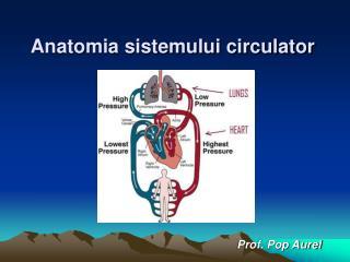 Anatomia sistemului circulator