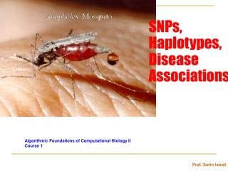 SNPs,  Haplotypes, Disease Associations