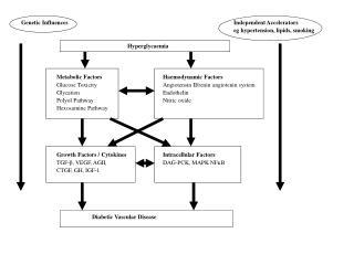 Genetic Influences Independent Accelerators eg hypertension, lipids, smoking