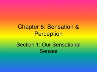 Chapter 6 Sensation  Perception