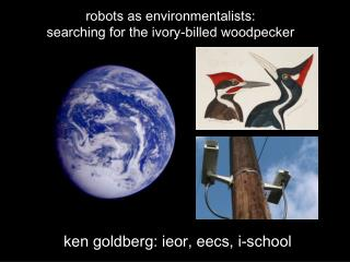 robots as environmentalists: searching for the ivory-billed woodpecker