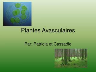 Plantes Avasculaires