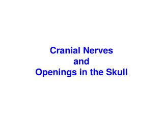 Cranial Nerves and Openings in the Skull