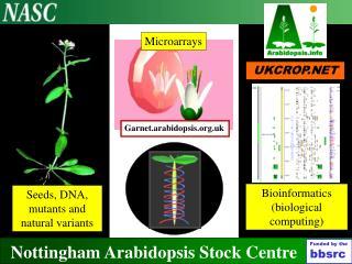Nottingham Arabidopsis Stock Centre