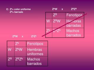 Z b = color uniforme Z B = barrado