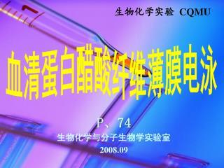 血清蛋白醋酸纤维薄膜电泳