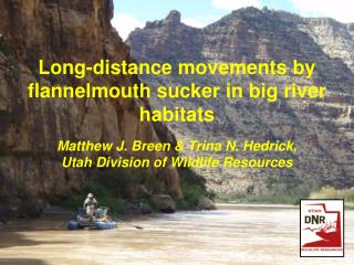 Long-distance movements by flannelmouth sucker in big river habitats