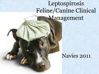 Leptospirosis Feline/Canine Clinical Management
