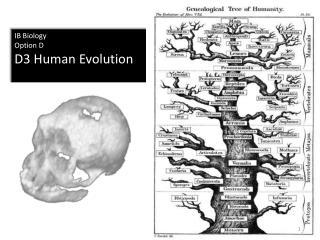 IB Biology Option D D3 Human Evolution