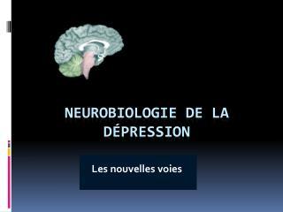 Neurobiologie de la d�pression