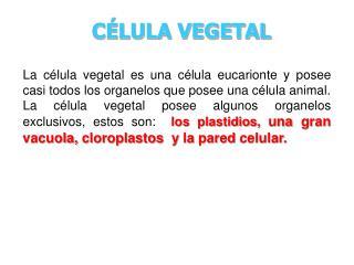 C�LULA VEGETAL