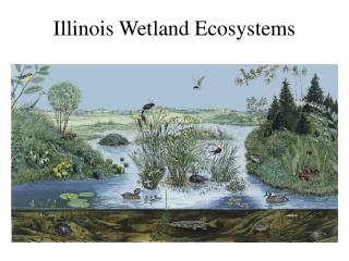 Illinois Wetland Ecosystems