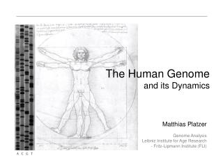 The Human Genome and its Dynamics