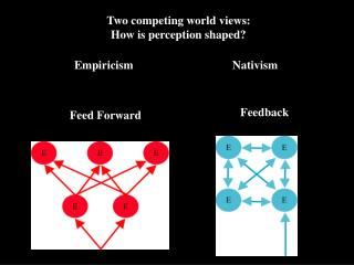 Two competing world views: How is perception shaped?