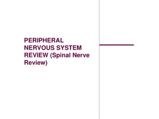 PERIPHERAL NERVOUS SYSTEM REVIEW (Spinal Nerve Review)