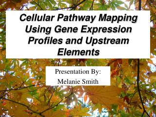 Cellular Pathway Mapping Using Gene Expression Profiles and Upstream Elements