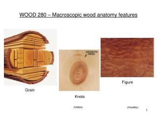 WOOD 280 – Macroscopic wood anatomy features