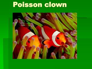 Poisson clown