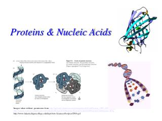 Proteins & Nucleic Acids