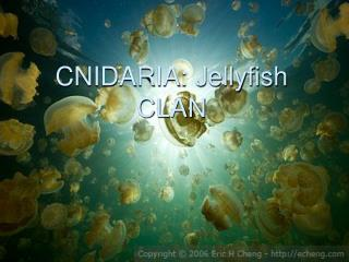 CNIDARIA: Jellyfish CLAN