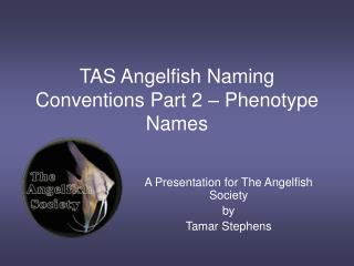 TAS Angelfish Naming Conventions Part 2 – Phenotype Names
