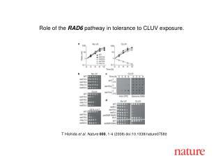 T Hishida  et al. Nature 000 , 1-4 (2008) doi:10.1038/nature07580