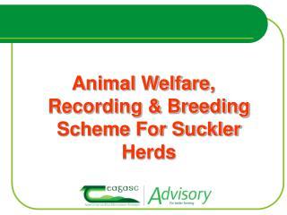 Animal Welfare, Recording  Breeding Scheme For Suckler Herds