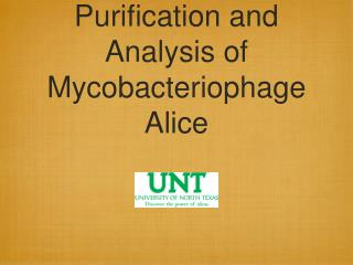 Purification and Analysis of Mycobacteriophage Alice