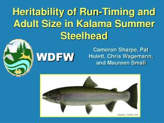 Heritability of Run-Timing and Adult Size in Kalama Summer Steelhead