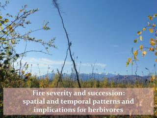 Fire severity and succession:  spatial and temporal patterns and implications for herbivores