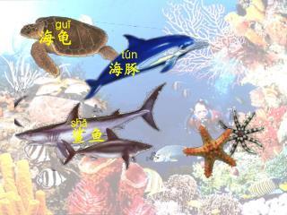 guī 海龟