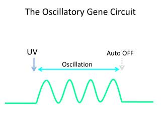 The Oscillatory Gene Circuit