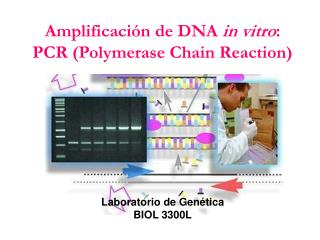 Amplificación de DNA  in vitro : PCR (Polymerase Chain Reaction)