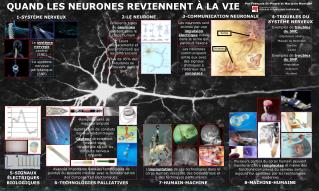 QUAND LES NEURONES REVIENNENT À LA VIE