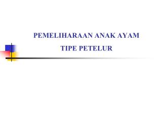 PEMELIHARAAN ANAK AYAM  TIPE PETELUR
