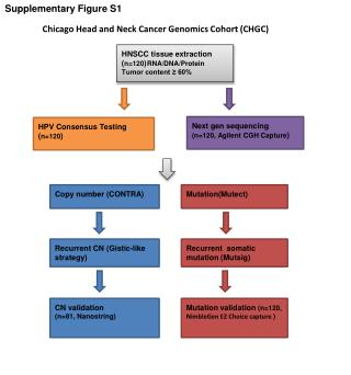 HNSCC tissue extraction ( n=120 ) RNA/DNA/Protein  Tumor content ≥ 60%