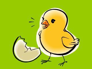 springchicken