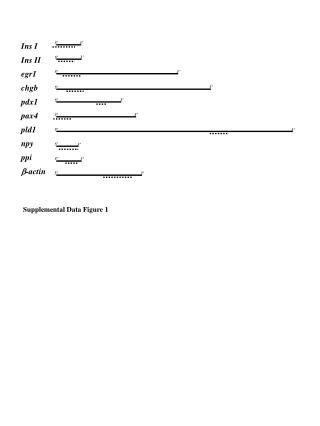 Ins I Ins II egr1 chgb pdx1 pax4 pld1 npy ppi b -actin